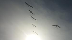 birds4&1inair